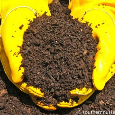 A sample of mushroom compost