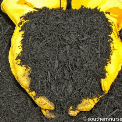 Hands holding forever black mulch